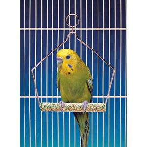 Penn Plax Cement Bird Swing - With Wire Frame 4In